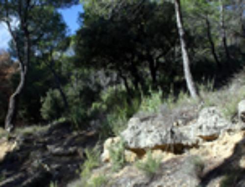 Informations pour une promenade en Provence